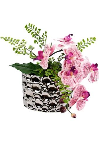 I.GE.A. Kunstpflanze (1 Stück) kaufen