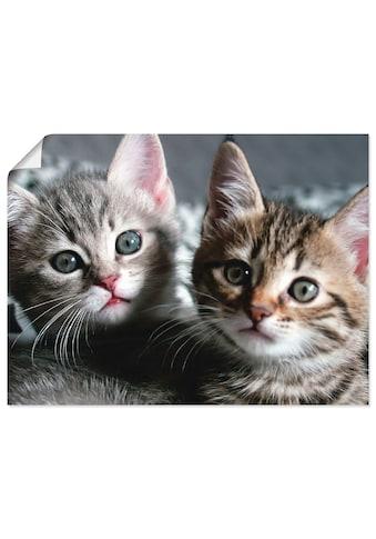 Artland Wandbild »Katze«, Haustiere, (1 St.), in vielen Grössen & Produktarten -... kaufen