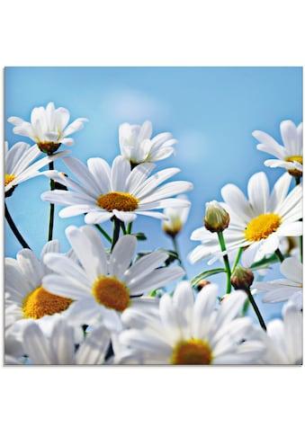 Artland Glasbild »Blumen - Margeriten«, Blumen, (1 St.) kaufen