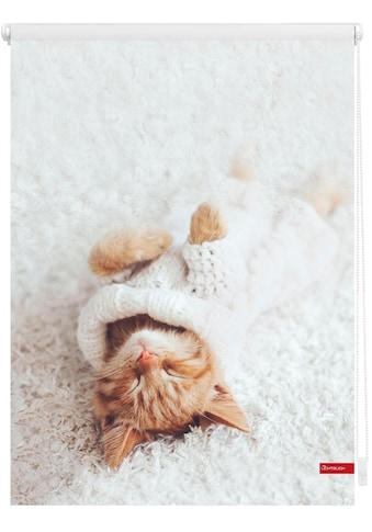 LICHTBLICK ORIGINAL Seitenzugrollo »Klemmfix Digital Sleepy Cat«, verdunkelnd,... kaufen