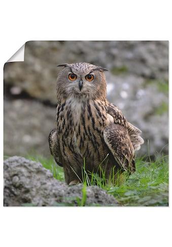Artland Wandbild »Uhu«, Vögel, (1 St.), in vielen Grössen & Produktarten - Alubild /... kaufen