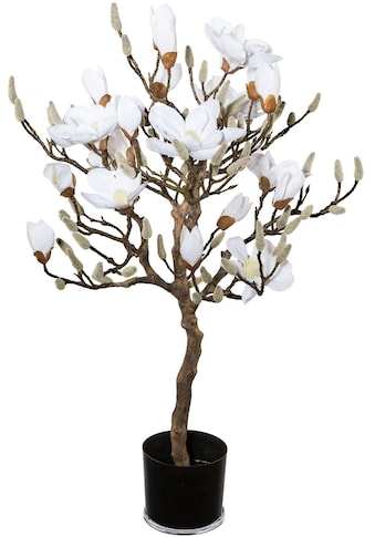 Creativ green Kunstpflanze »Magnolienbaum« kaufen