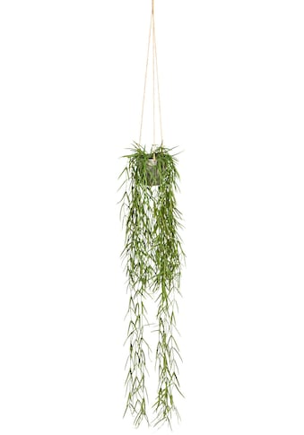Creativ green Kunstranke »Tillandsia aeranthos im Hängetopf«, im Hängetopf aus Kunststoff kaufen