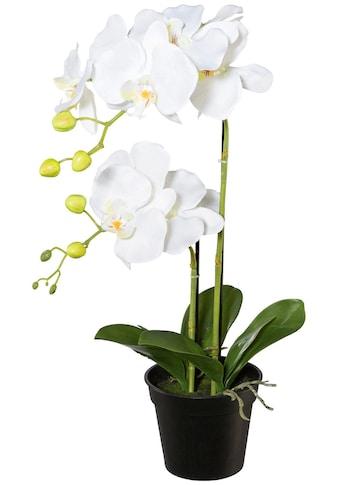 Creativ green Kunstpflanze »Orchidee Phalaenopsis« (1 Stück) kaufen