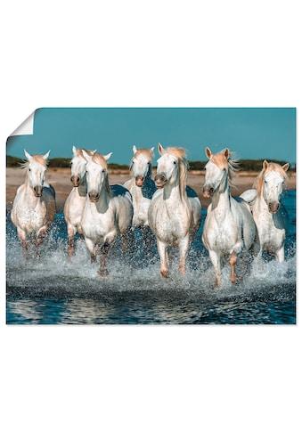 Artland Wandbild »Camargue Pferde galoppieren am Strand«, Haustiere, (1 St.), in... kaufen