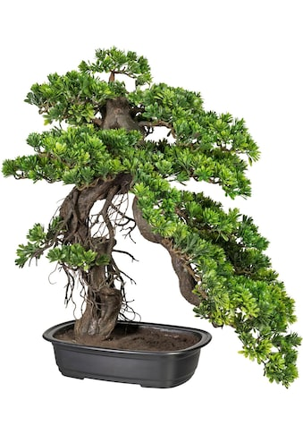 Creativ green Kunstpflanze »Bonsai Podocarpus« (1 Stück) kaufen