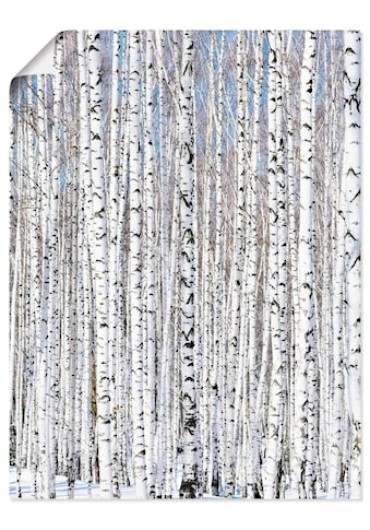 Artland Wandbild »Winterbirkenwald Wintergelassenheit«, Bäume, (1 St.), in vielen... kaufen