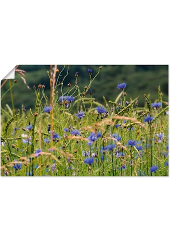 Artland Wandbild »Kornfeld und Kornblumen«, Blumenwiese, (1 St.), in vielen Grössen &... kaufen