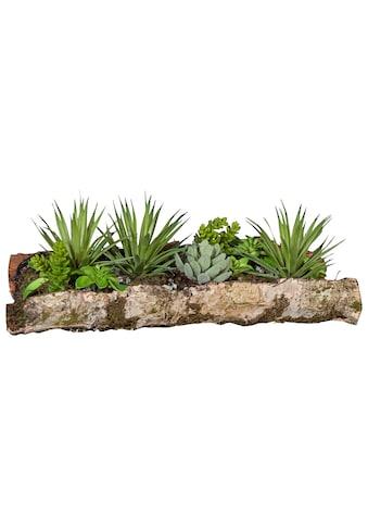 Creativ green Kunstpflanze »Sukkulenten« (1 Stück) kaufen