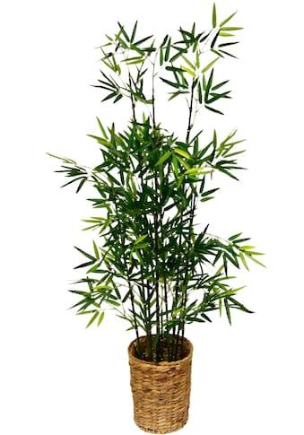 Kunstpflanze »Bambus« kaufen