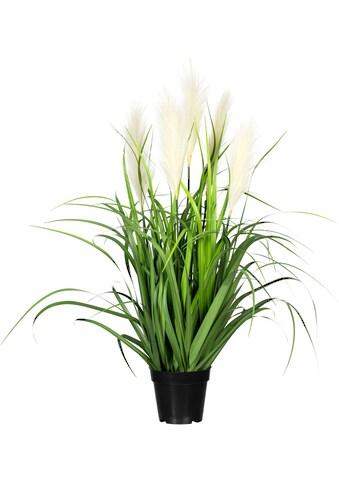 Creativ green Kunstgras »Grasbusch mit Pampaswedel« (1 Stück) kaufen