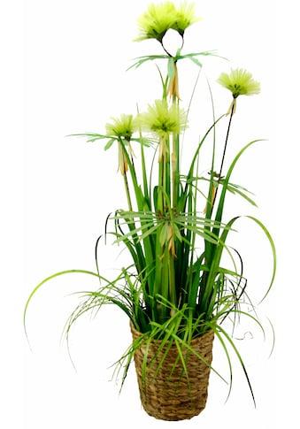 I.GE.A. Kunstpflanze »Papyrusgras« kaufen