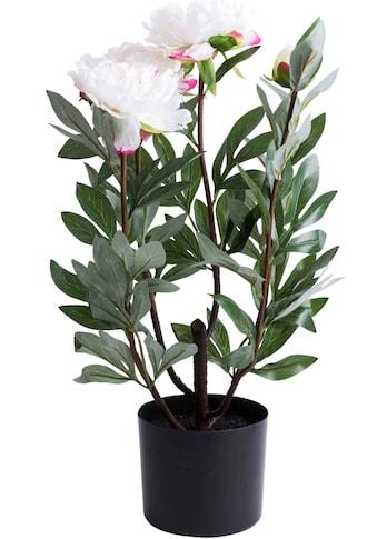 Botanic-Haus Kunstblume »Pfingstrose Vivaldi« kaufen