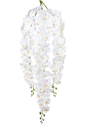 Creativ green Kunstorchidee »Phalaenopsisranke« (1 Stück) kaufen