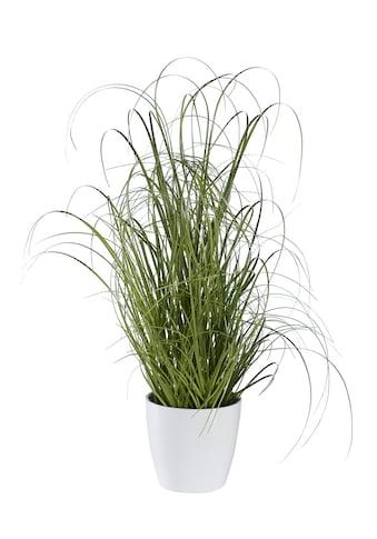 Plante déco acheter