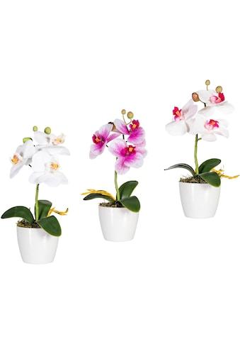 Creativ green Kunstpflanze »Phalaenopsis« (Set, 3 Stück) kaufen