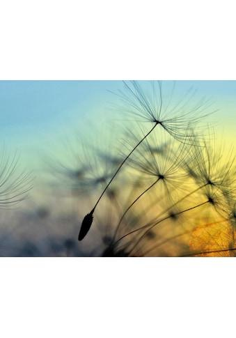 Home affaire Glasbild »supertramp8: Sonnenuntergang und Pusteblumen«, 80/60 cm kaufen