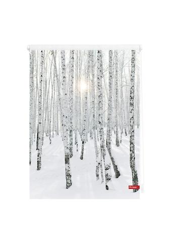 LICHTBLICK ORIGINAL Seitenzugrollo »Klemmfix Motiv Birkenwald«, Lichtschutz, ohne... kaufen