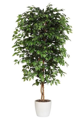 Creativ green Kunstpflanze »Ficus Benjamini« (1 Stück) kaufen