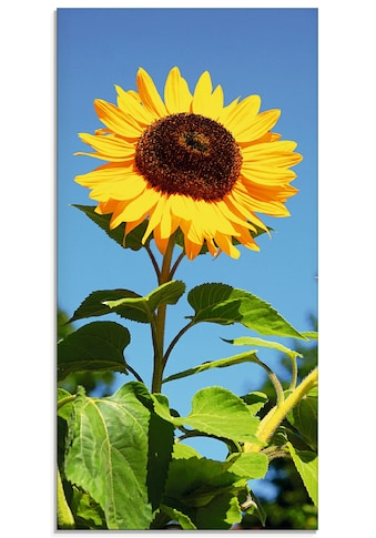 Artland Glasbild »Grosse Sonnenblume«, Blumen, (1 St.) kaufen