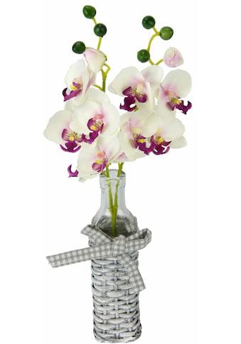 I.GE.A. Kunstpflanze »Orchideen in Weideglasvase« (1 Stück) kaufen