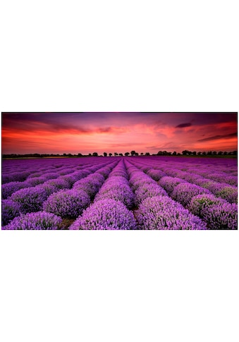 Art & Pleasure Acrylglasbild »Lavender sunset«, Sonnenaufgang & -untergang kaufen