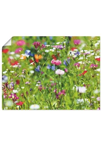 Artland Wandbild »Blumenwiese I«, Blumenwiese, (1 St.), in vielen Grössen &... kaufen