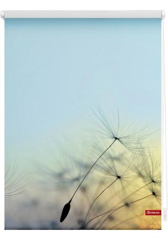 LICHTBLICK Seitenzugrollo »Klemmfix Motiv Pusteblume«, Lichtschutz, ohne Bohren,... kaufen