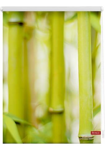 Seitenzugrollo »Klemmfix Motiv Bambus«, LICHTBLICK, Lichtschutz, ohne Bohren, freihängend kaufen