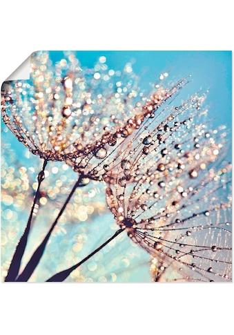 Artland Wandbild »Pusteblume Tröpfchenfänger«, Blumen, (1 St.), in vielen Grössen &... kaufen