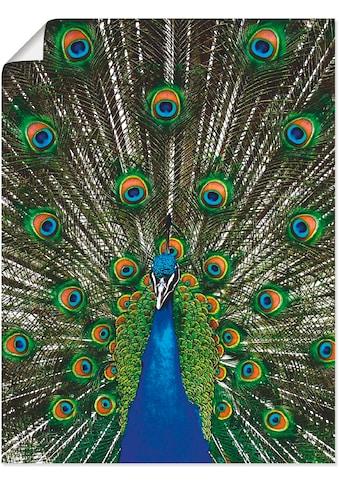 Artland Wandbild »Pfau«, Vögel, (1 St.), in vielen Grössen & Produktarten... kaufen