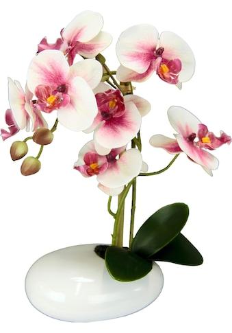 Kunstpflanze »Phalaenopsis in Schale« kaufen