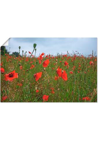 Artland Wandbild »Mohnblumen«, Blumen, (1 St.), in vielen Grössen & Produktarten -... kaufen