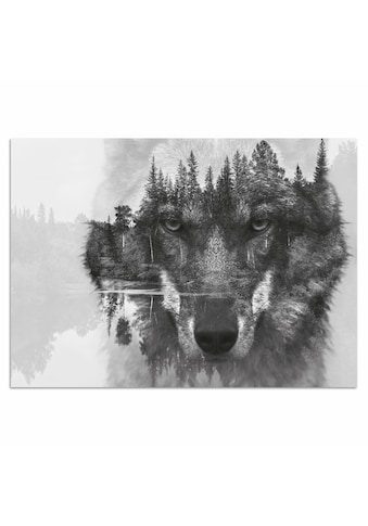 Home affaire Acrylglasbild »Wolf«, 60/40 cm kaufen