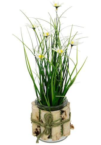 I.GE.A. Kunstblume »Margeriten im Gras«, 3er Set kaufen