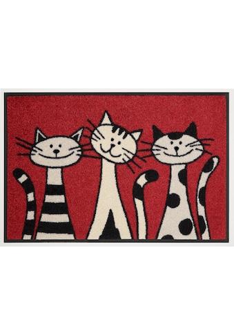 wash+dry by Kleen-Tex Fussmatte »Three Cats«, rechteckig, 9 mm Höhe, Schmutzfangmatte,... kaufen
