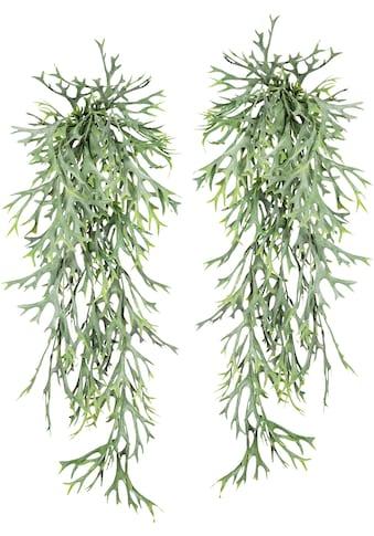 Creativ green Kunstranke »Geweihfarnhänger«, 2er Set kaufen