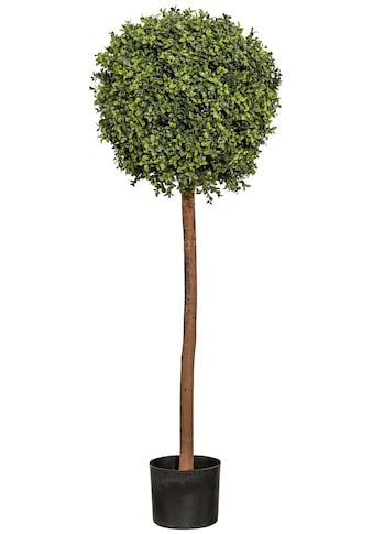 Creativ green Kunstpflanze »Buchskugelbaum« kaufen