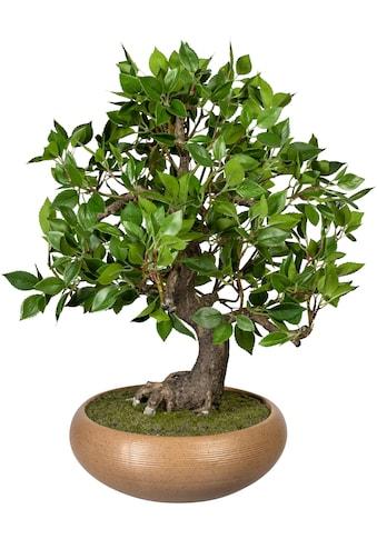 Creativ green Kunstbonsai »Bonsai Ficus«, in Keramikschale kaufen