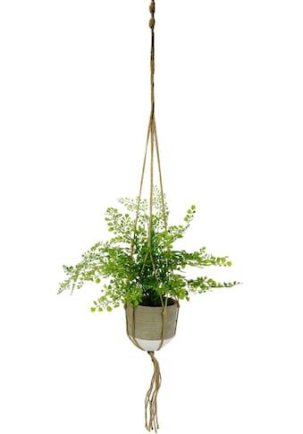 I.GE.A. Kunstpflanze »Frauenhaar« (1 Stück) kaufen