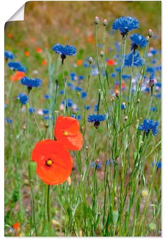 Artland Wandbild »Wiese mit Mohnblumen und Kornblumen«, Blumen, (1 St.), in vielen... kaufen
