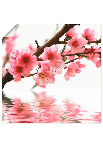 Artland Wandbild »Pfirsichblüten reflektieren im Wasser«, Blumen, (1 St.), in vielen... kaufen