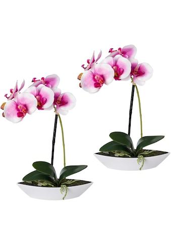 Creativ green Kunstorchidee »Phalaenopsis« (2 Stück) kaufen