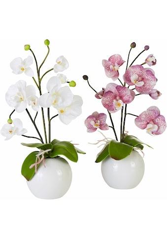 Kunstpflanze »Orchidee« (Set, 2 Stück) kaufen