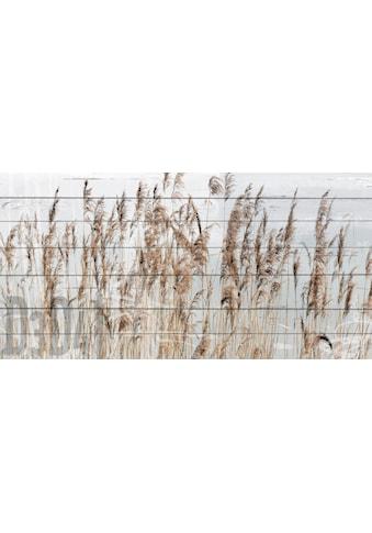 QUEENCE Holzbild »Schilf«, 40x80 cm Echtholz kaufen