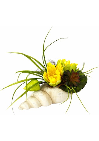 I.GE.A. Kunstpflanze »Gesteck Seerose in Muschel« (1 Stück) kaufen