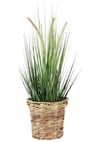 I.GE.A. Kunstpflanze »Gras« kaufen