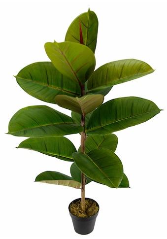I.GE.A. Künstliche Zimmerpflanze »Gummibaum« kaufen