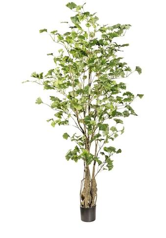 Creativ green Kunstpflanze »Gingkobaum« kaufen