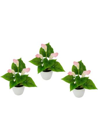 Künstliche Zimmerpflanze »Mini Calla« (Set, 3 Stück) kaufen
